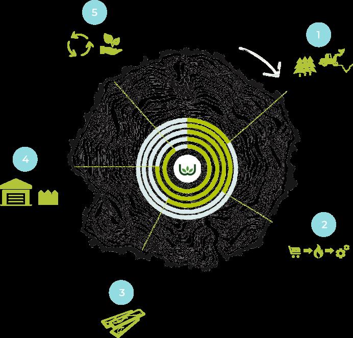 Rhino Wood Life Cycle Diagram